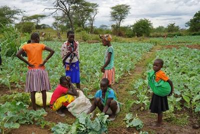 producteurs-de-choux-en-ouganda